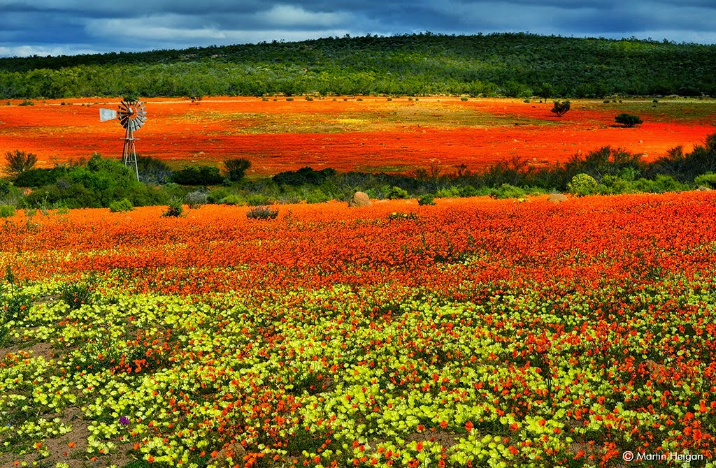 the flowering desert of Namaqualand, South Africa for spring breaks