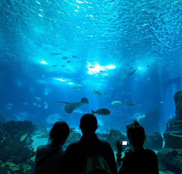 Aquarium Le Navi Cattolica, Rimini
