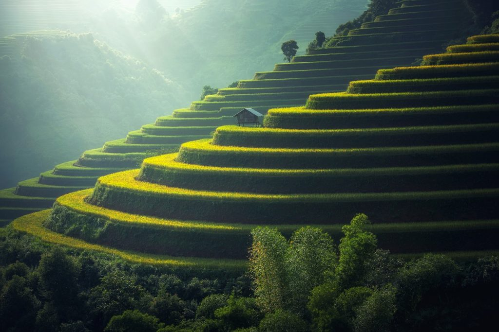 The most beautiful rice fields in the island of Bali